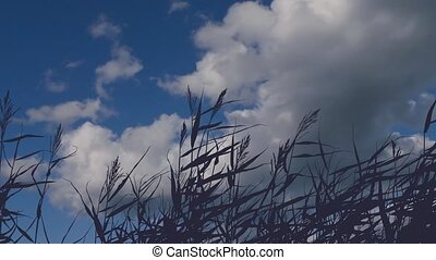 motionless grass silhouette against a background of moving clouds