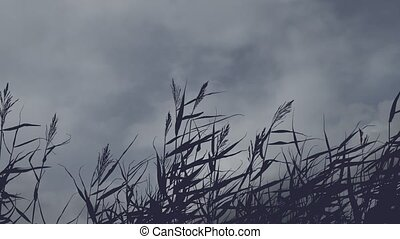 motionless grass silhouette against a background of moving...