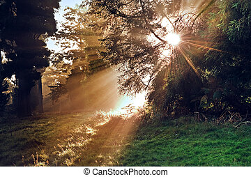 Motivational sunbeams through trees in Autumn Fall forest at...