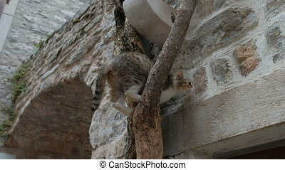 Motley cat trying to get down from the highest tree in the...