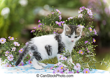 Motley kitten standing on a background of flowers
