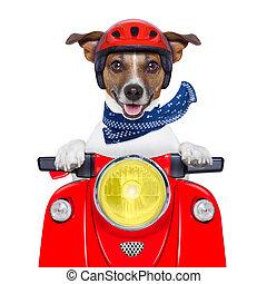 motocicleta, perro