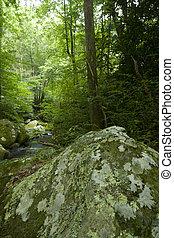 Motor Nature Trail, Smokies - Roaring Fork, Motor Nature...
