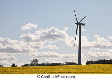 motor, oilseed, viento