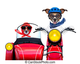 motorbike dogs together in love having a hiloday trip