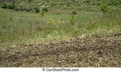 Motorbike speeding on dirt close up. Dirt flying behind the...