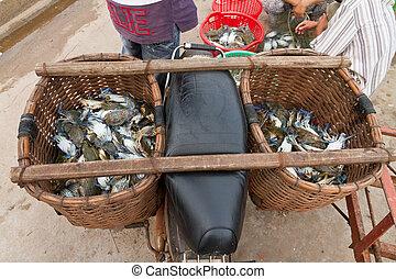 Motorbike with freshly caught blue crabs (lat. Callinectes sapidus) in fishing villiage Ham Ninh, Phu Quoc, Vietnam