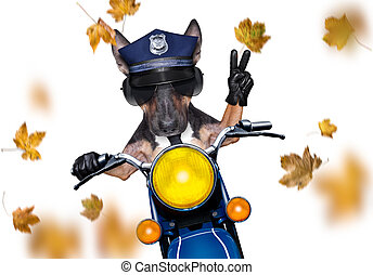 motorcycle diva lady fancy dog driving a motorbike with sunglasses isolated on white background, in windy autumn fall with leaves flying around