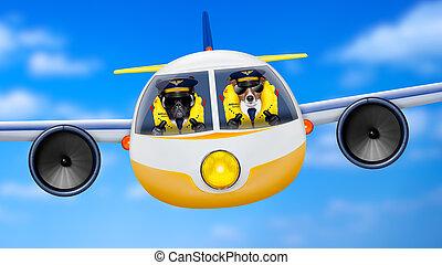 motorflugzeug, hunden, pilot