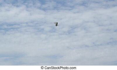 Motorized Hang Gliders - A motorized hang gliders is passing...