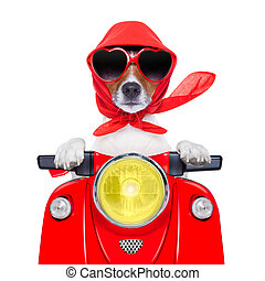 motorrad, hund, sommer, hund