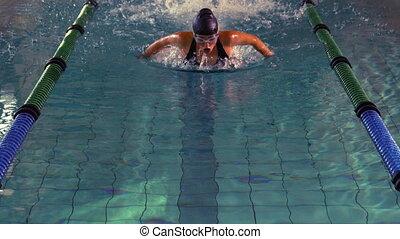 motyl, atak, pływak, uderzenie