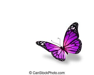 motyl, biały, odizolowany, tło, fiołek