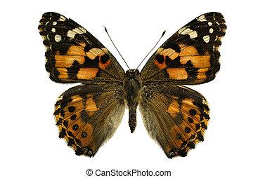 motyl, dama, barwiony