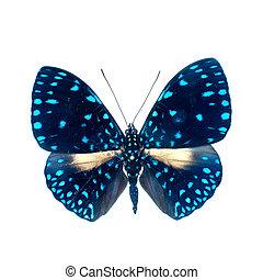 motyl, definicja, wysoki, białe tło