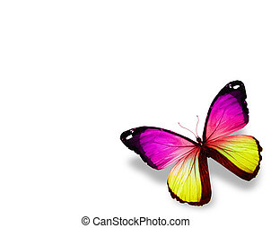motyl, odizolowany, tło, fiołek, biały