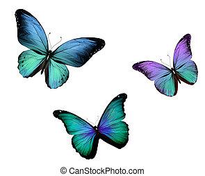 motyl, odizolowany, trzy, tło, biały