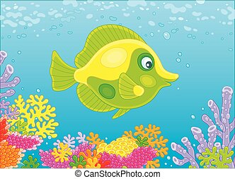 motyl ryba, rafa