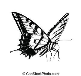 motyl, rys, odizolowany, ilustracja, ręka, ozdoba, tło., wektor, czarnoskóry, kolor, pociągnięty, biały, rysunek, afisze, print.