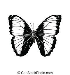 motyl, rys, odizolowany, ilustracja, ręka, ozdoba, tło., wektor, czarnoskóry, pociągnięty, biały, color., rysunek, afisze, print.