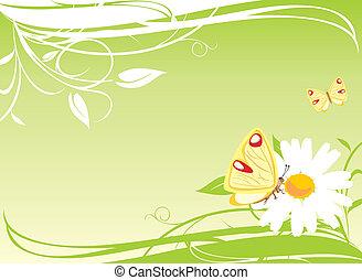 motyle, chamomile