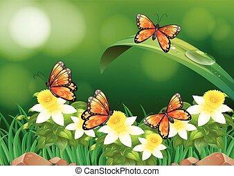 motyle, przelotny, ogród