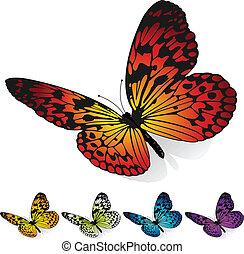 motyle, wektor, komplet, barwny