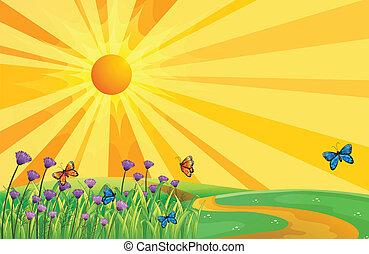 motyle, zachód słońca, prospekt