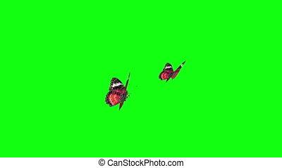 motyle, zielony, ekran, czerwony
