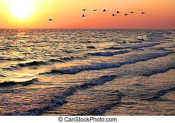motyw morski, z, kiwa, na, zachód słońca