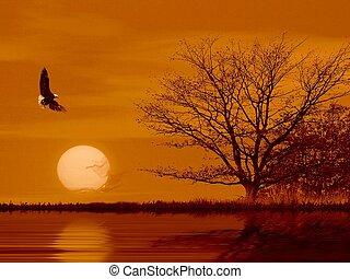 mouche, aimer, une, eagle.