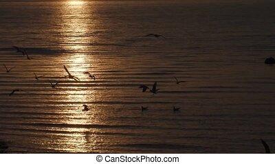 mouche, coucher soleil, sur, mouettes, mer