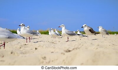 mouche, course, mouettes, mer, plage blanche, long, sablonneux