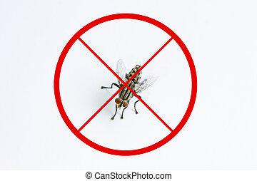 mouche, maladie, concept, prendre garde, arrêt, mouche domestique, fond, animal, porteur, blanc, germe, ou, rouges, signe