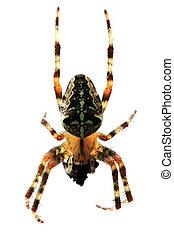 mouche, manger, araignés