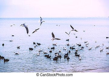 mouche, mood., sur, couvert, mouettes, flight., sea., weather., oiseaux