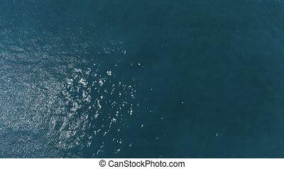 mouche, mouvement, lent, sur, surface, eau océan, dérangé