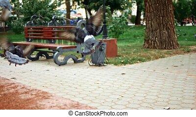 mouche, pigeon, loin