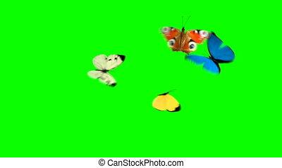 mouche, quatre, papillons, arrière-plan vert