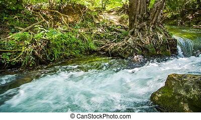 mouche, rapide, courant, si, eclabousse, rivière