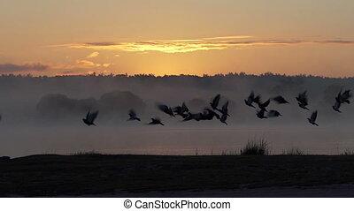 mouche, slo-mo, sur, lac, coucher soleil, troupeau, pigeons, gentil