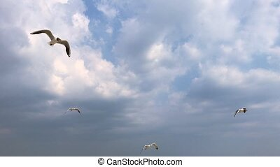 mouche, ukraine, fond, ciel, nuages, mouettes, mer, blanc, vue