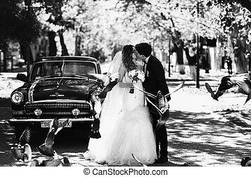 mouche, vieux, voiture, pigeons, derrière, baiser, mariage, devant, couple