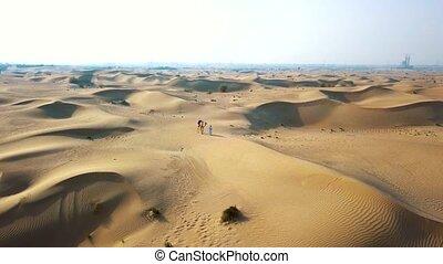 mouches, bédouin, aérien, chameau, sur, bourdon, enquête, va, par, désert, désert