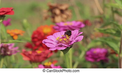 mouches, fleur, nectar, loin, bourdon, collects