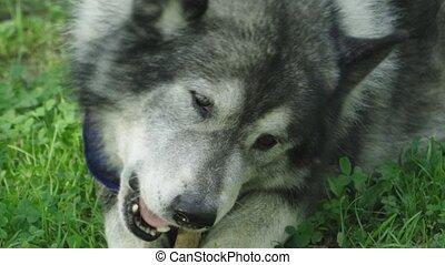 mouchoir, grignote, loup, autour de, aimer, bleu, sien, ...