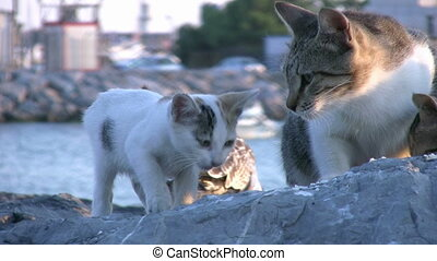 mouette, chats, manger ensemble
