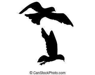 mouette, oiseau, vecteur, silhouette