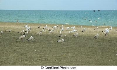 mouettes, sable plage