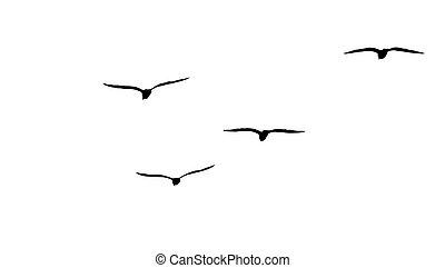 mouettes, troupeau, silhouette, migrateur